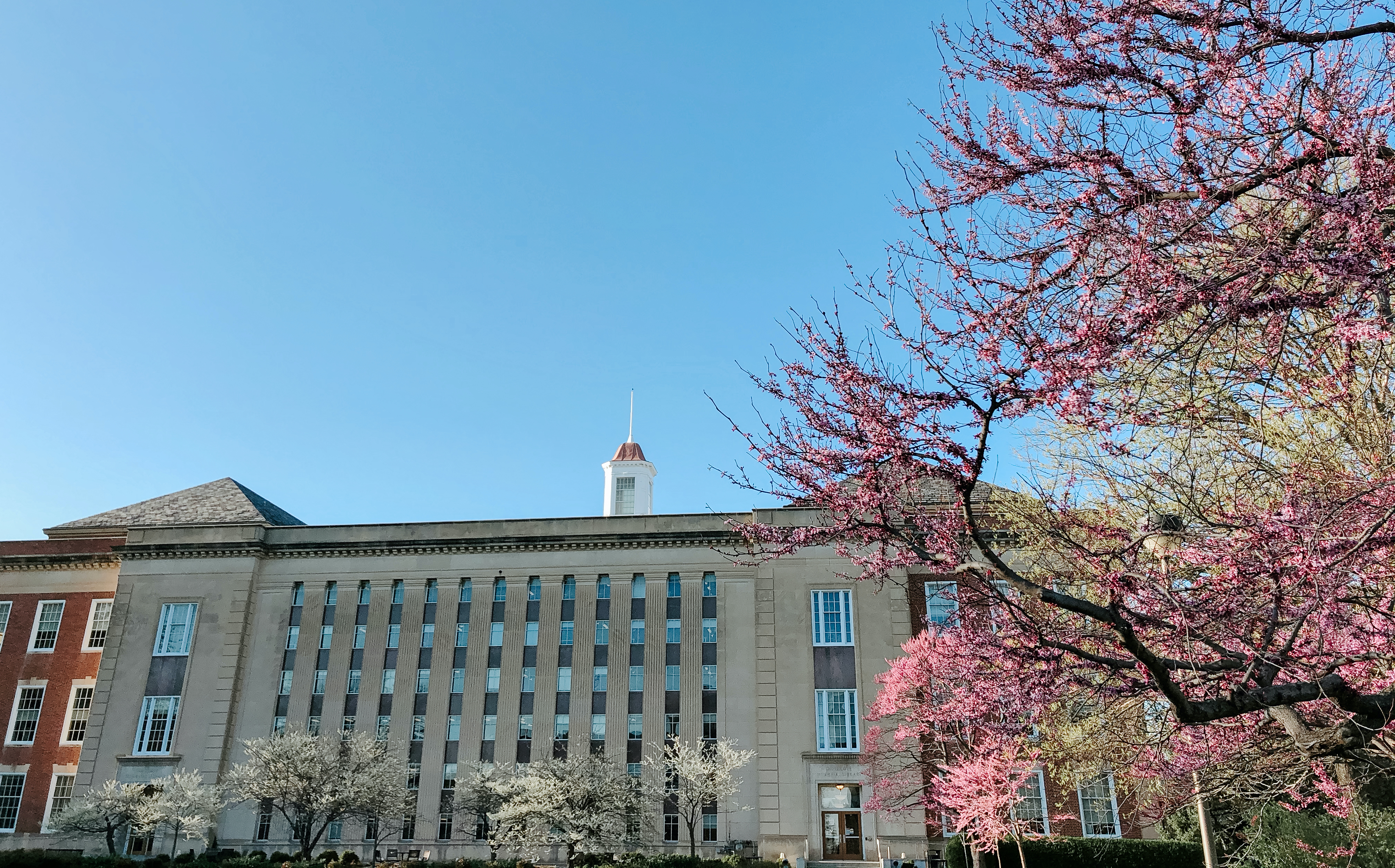 Spring Library photo